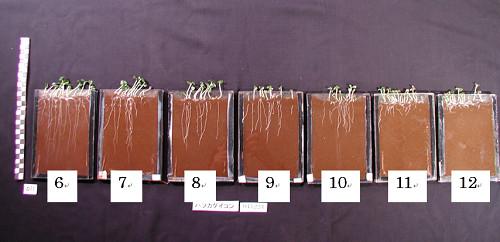 PHと植物生成の関係図